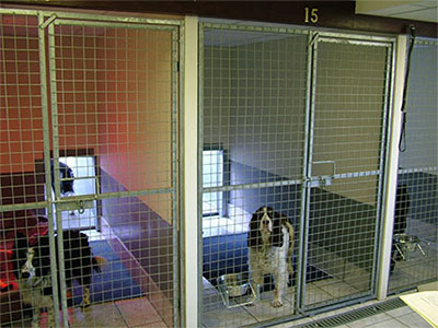 familysizedkennels